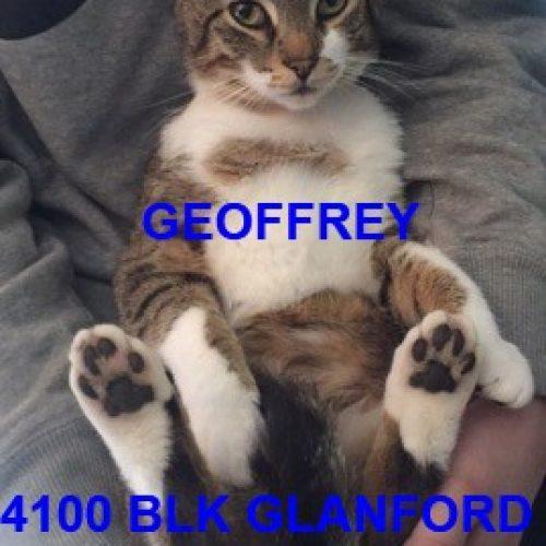 Lost Cat: Geoffrey