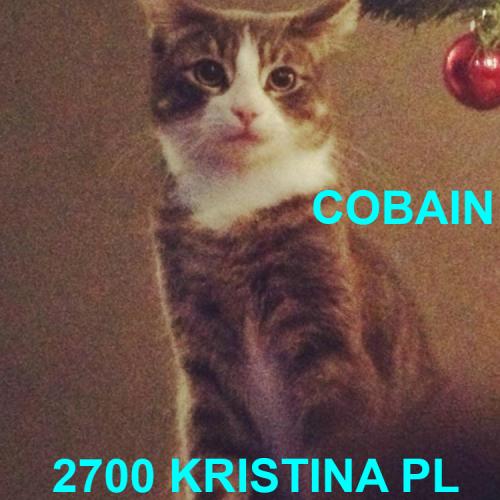 Lost Cat: Cobain