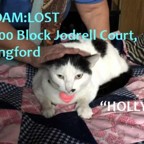 Lost Cat: Holly