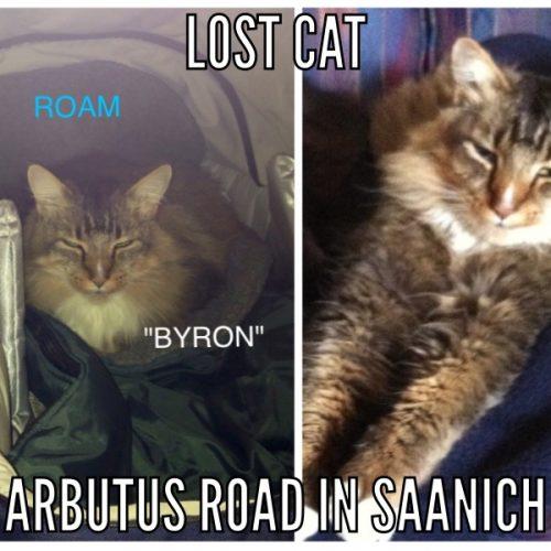 Lost Cat: Byron