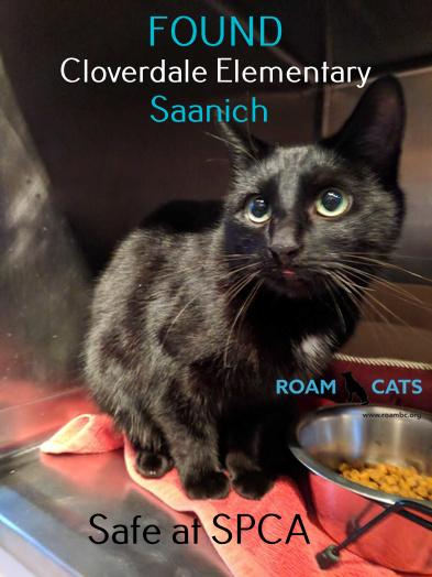 Adopted Via SPCA- Found Cat: Cloverdale Avenue, Victoria, BC