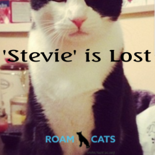 Lost Cat: Stevie
