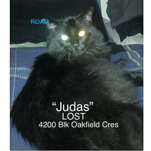 Lost Cat: Judas