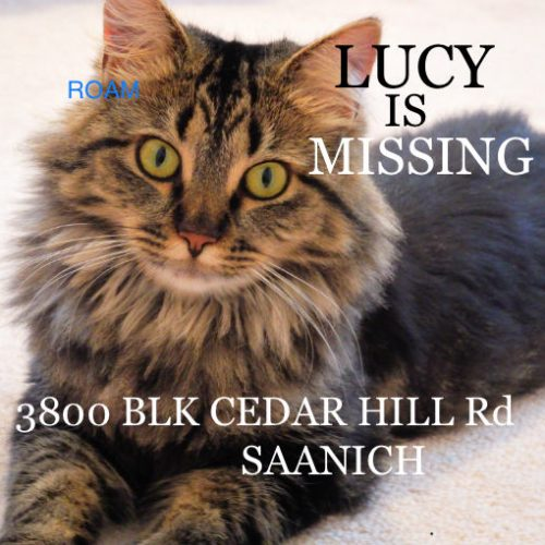 Lost Cat: Lucy