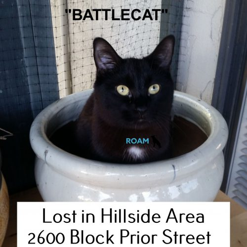 Lost Cat: Battlecat