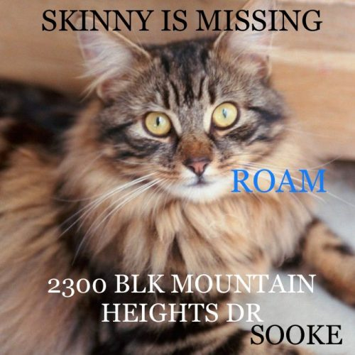 Lost Cat: Skinny