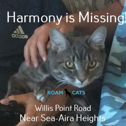 Lost Cat: Harmony Sea-Aira Heights