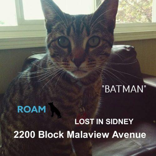 Lost Cat: Batman