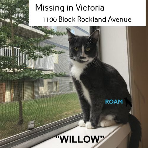 Lost Cat: Willow