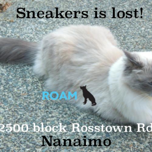 Lost Cat: Sneakers