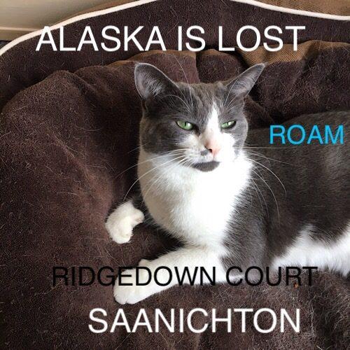 Lost Cat: Alaska