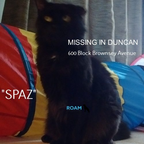 Lost Cat: Spaz