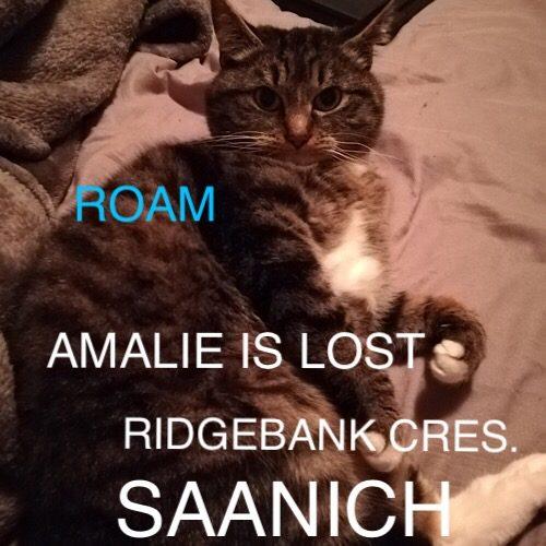 Lost Cat: Amalie