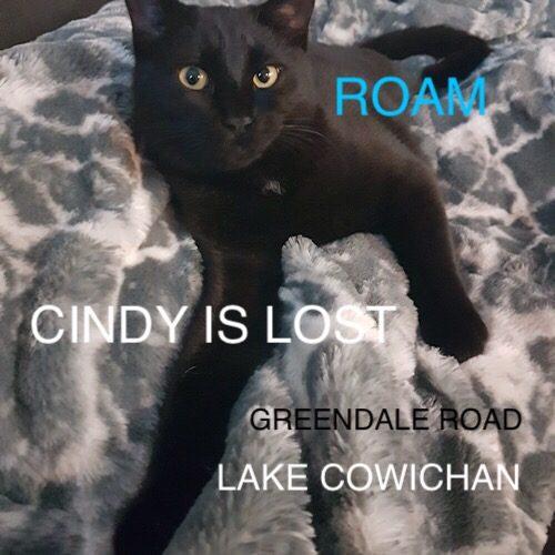 Lost Cat: Cindy