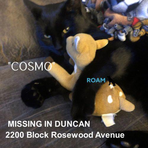 Lost Cat: Cosmo