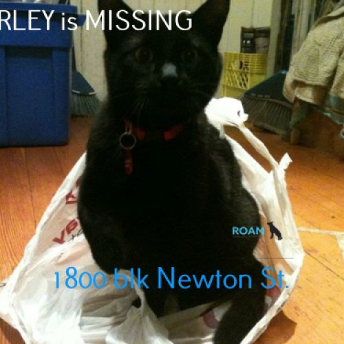 Lost Cat: Marley