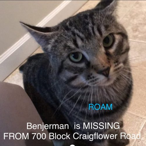 Lost Cat: Benjerman