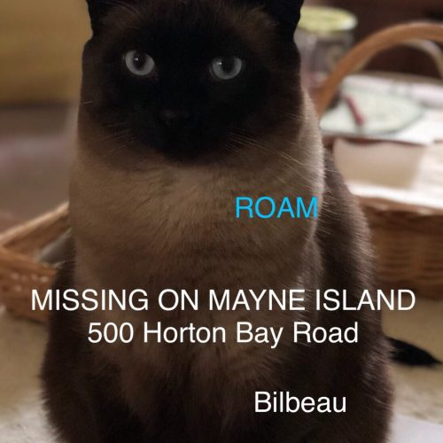 Lost Cat: Bilbeau