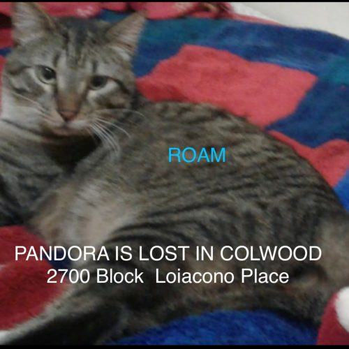 Lost Cat: Pandora