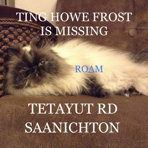 Lost Cat: Ting Howe Frost