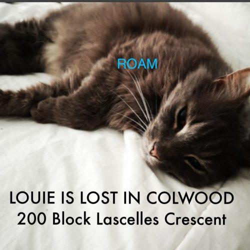 Lost Cat: Louie