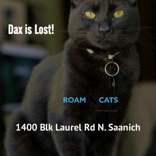 Lost Cat: Dax