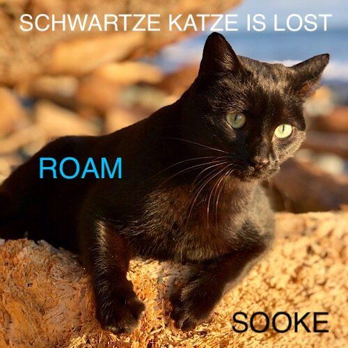 Lost Cat: Schwartze Katze