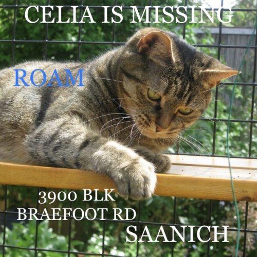 Lost Cat: Celia