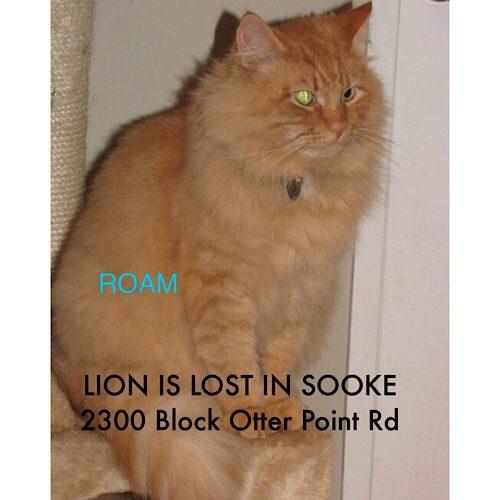 Lost Cat: Lion