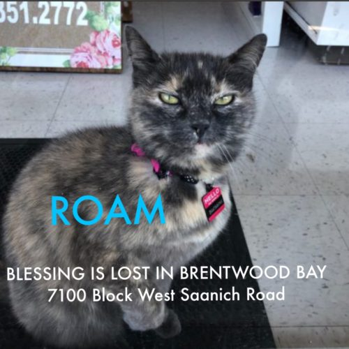 Lost Cat: Blessing