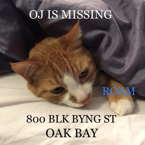 Lost Cat: OJ