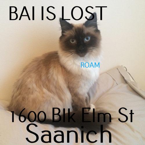 Lost Cat: Bai
