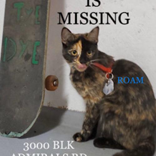 Lost Cat: Ellie