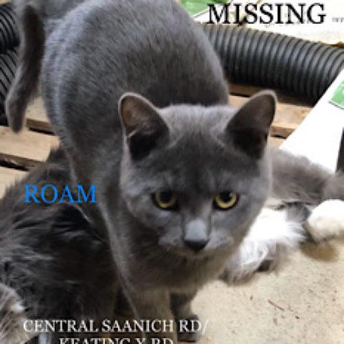 Lost Cat: Summer