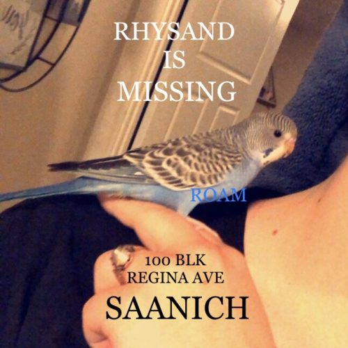 Lost Budgie: Rhysand