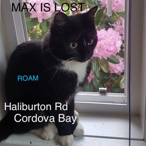 Lost Cat: Max