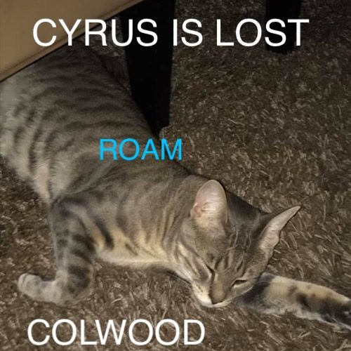 Lost Cat: Cyrus