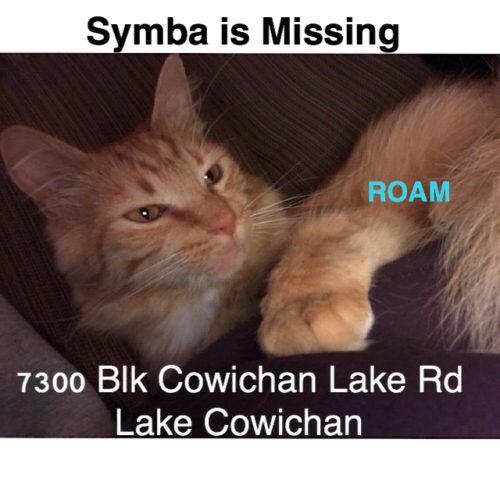 Lost Cat: Symba