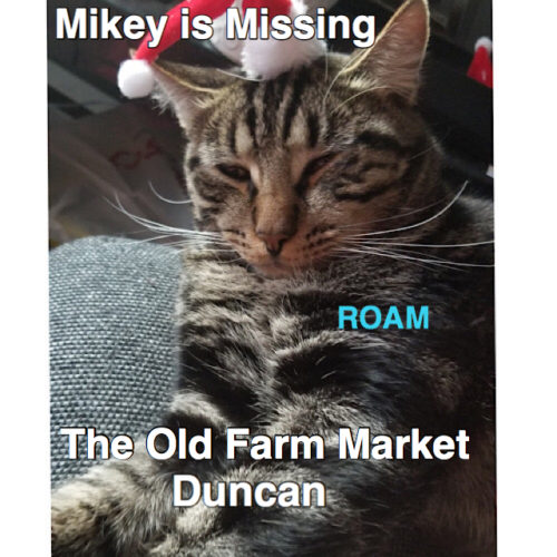 Lost Cat: Mikey