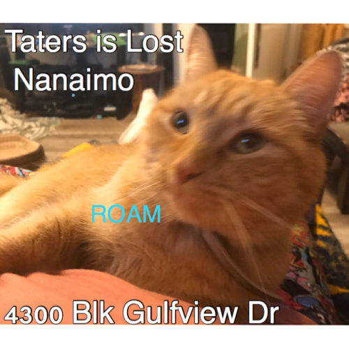 Lost Cat: Taters