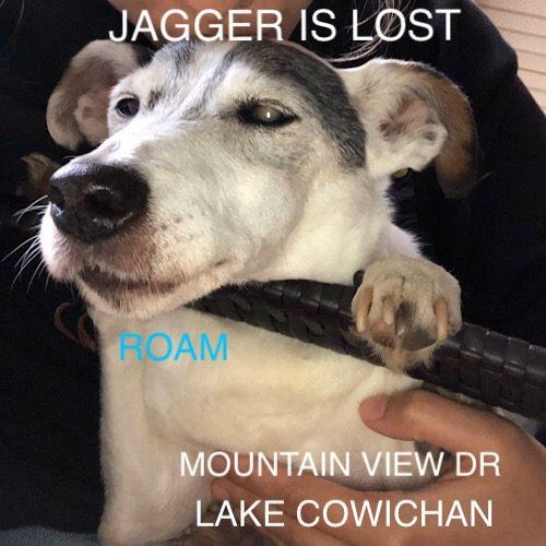 Lost Dog: Jagger