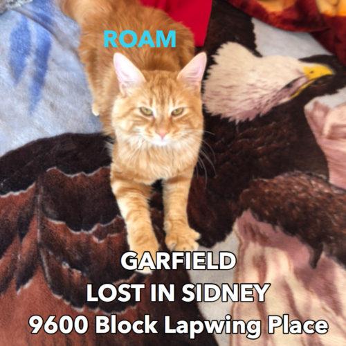 Lost Cat: Garfield