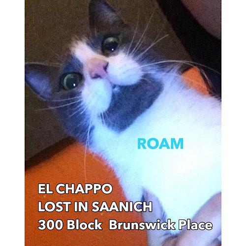 Lost Cat: El chappo