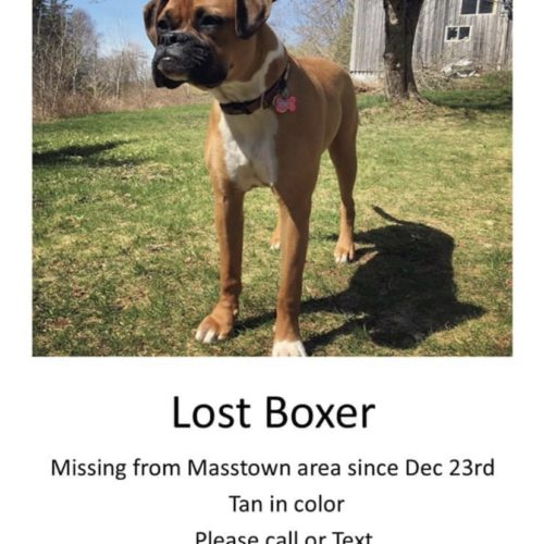 Out of Town (Nova Scotia) -Lost Dog: Annie
