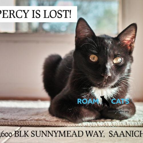 Lost Cat: Percy