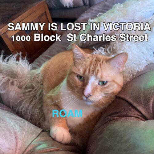 Lost Cat: Sammy