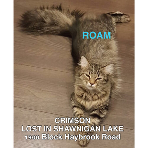 Lost Cat: Crimson