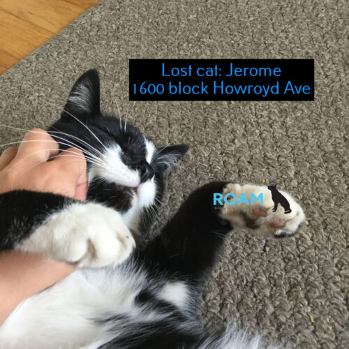 Lost Cat: Jerome