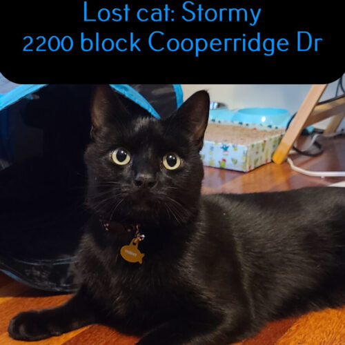 Lost Cat: Stormy
