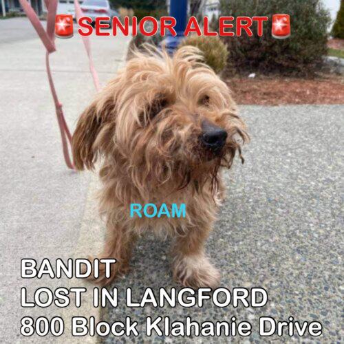 Lost Dog: Bandit